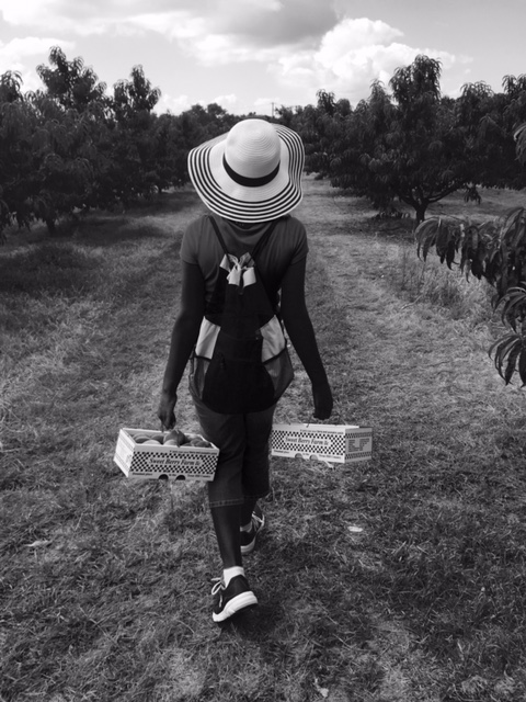 Carrying two boxes of peaches from the field to the house