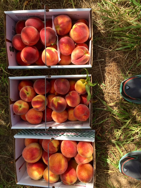 Three big boxes of peaches collected from the farm